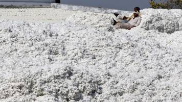 India's cotton textiles export down 10% in 3 years: Govt