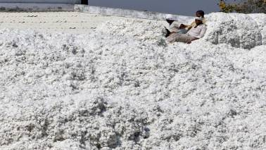 Cotton output for 2016-17 expected to be 340.50 lakh bales