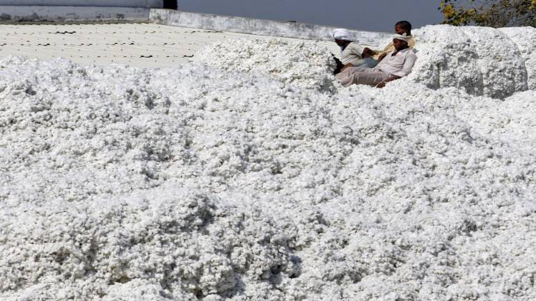 Cotton futures are expected to trade sideways: Angel Commodities