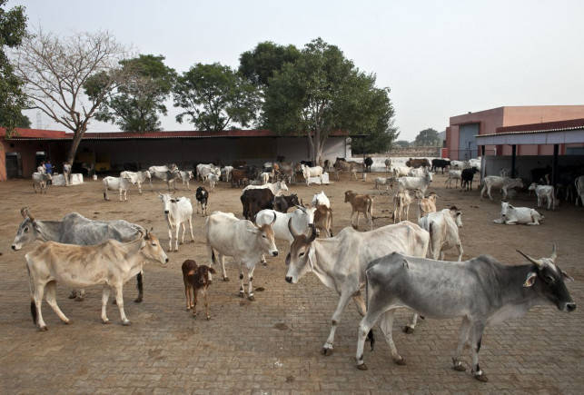 VHP demands stringent law to check cow slaughter