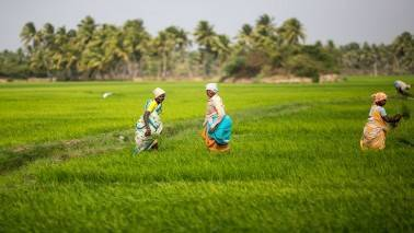 Rs 8,08,318 crore agriculture credit disbursed till Dec'16