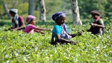 Goodricke group acquires tea division of Godfrey Phillips