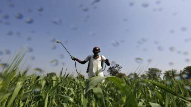 Can have adverse impact due to GST but nothing in long-term: Insecticides India