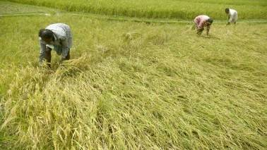 'Farm loan waivers disrupt credit discipline'