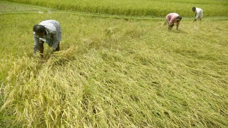 Stock up on milk, vegetables: Maharashtra farmers to go on strike from June 1