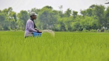 From June, fertiliser companies to get subsidy after PoS retail sale