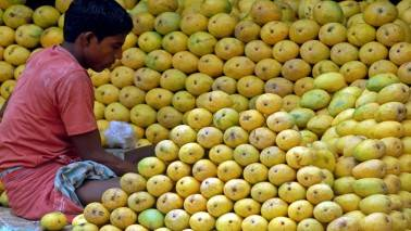 'India's mango exports in FY18 may touch 50,000 tonne mark'