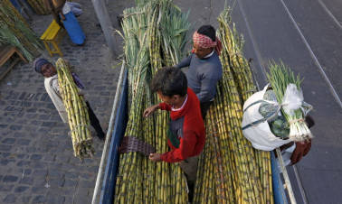 Govt hikes sugarcane FRP by Rs 25/qtl to Rs 255 for 2017-18