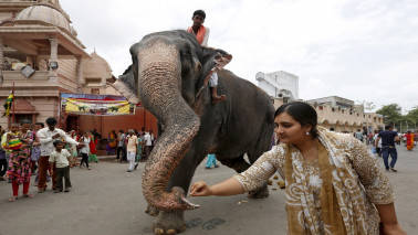 Madras HC slams use of elephants to bless people