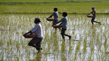 Southwest Monsoon arrival cheer Kharif farmers; 53% of area already cultivated