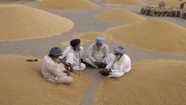 Govt aims record 273MT foodgrain output in 2017-18