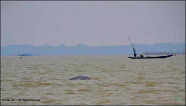 Chilika Lake – where a geography lesson comes alive