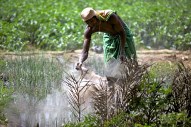 Rashtriya Chemicals and Fertilisers falls over 5% as offer for sale by govt opens
