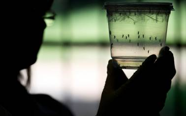 Four Zika cases reported in India so far: Government