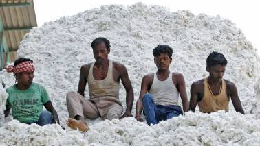Cotton output for 2016-17 expected to be 337.25 lakh bales