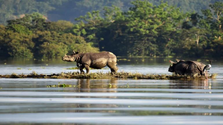 Assam flood claims 7 more lives; 12 lakh affected