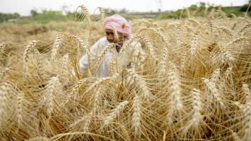 Is extending direct benefit transfers to fertilizers a boon or bane?