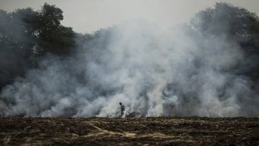 How burning paddy stubble in Punjab affects Delhi's air quality