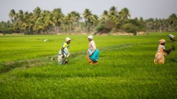 Working on programme to push agri exports from NE states: Commerce Ministry