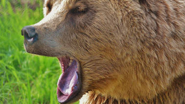 Market Live: Bears on rampage; Sensex falls over 350 pts, Nifty breaks 11,500
