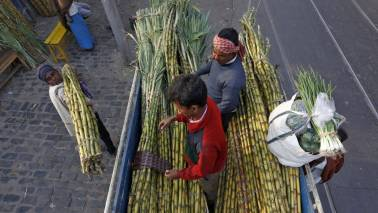 Farmers body demands sugar mills to pay 15% interest on delayed cane dues