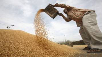Wheat sown in 298.47 lakh ha so far; close to last year's level