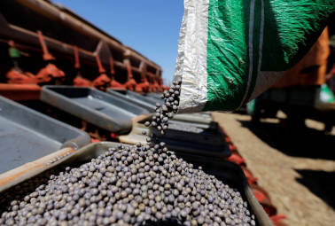 Soybean prices to trade higher today: Angel Commodities