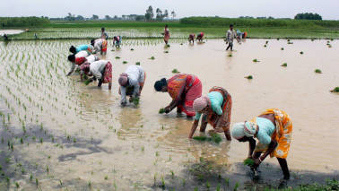 Farmers agitate over MSP, loan waiver issues