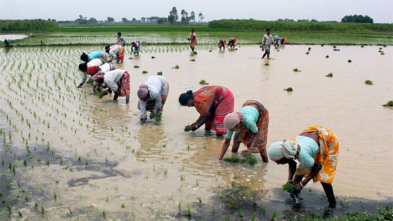 Haryana seeks Rs 1,600 cr from Centre for crop residue management