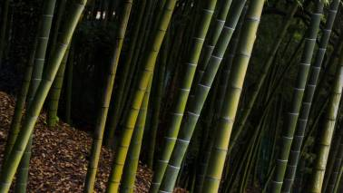 India has potential to become significant player in int bamboo market: Harsh Vardhan