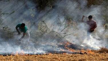 Govt approves plan to stop farmers burning crop residues