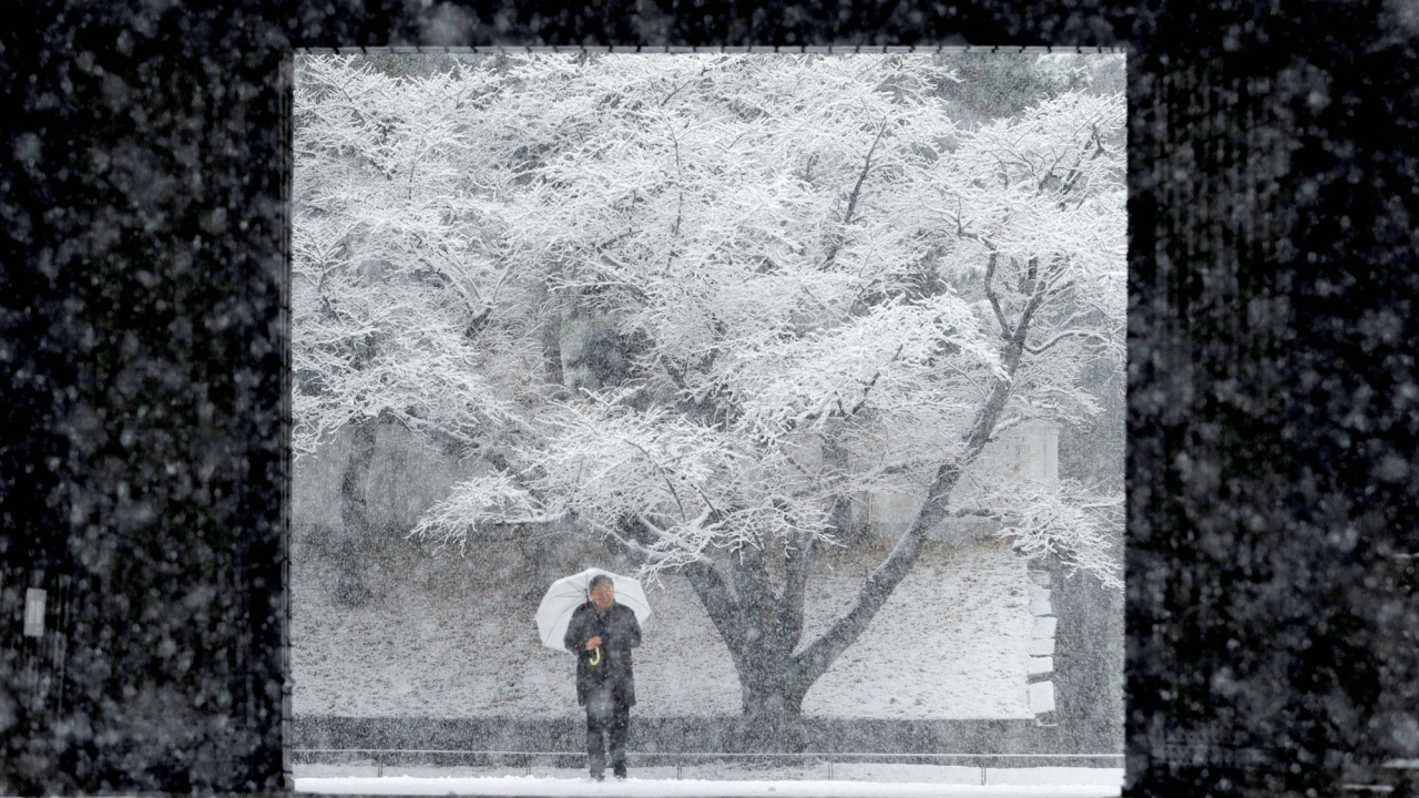 A man holding an umbrella makes his way in the heavy snow at the Imperial Palace in Tokyo, Japan. (REUTERS)