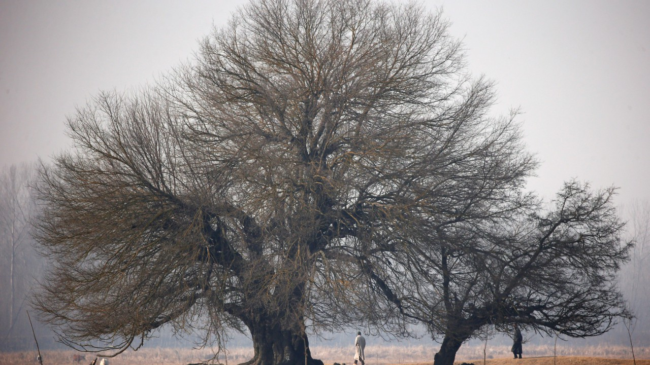 Men walk under trees along a wetland on a winter day on the outskirts of Srinagar. (REUTERS)