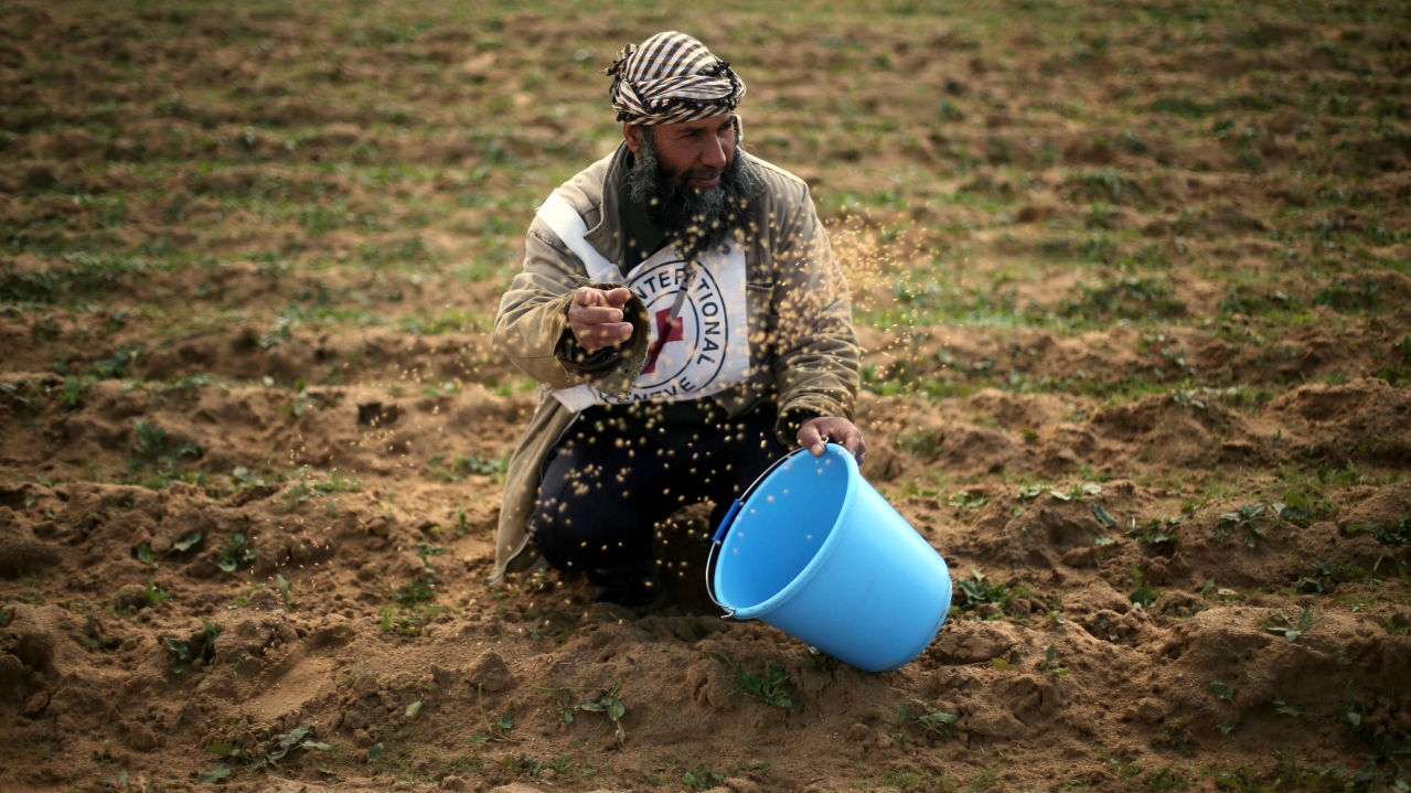 A Palestinian farmer throws wheat seeds during a tour by the International Committee of the Red Cross (ICRC), near the border with Israel, in the southern Gaza Strip. (REUTERS)