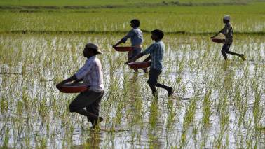 Over 50 lakh farmers left out of loan waiver in Maharashtra: Congress