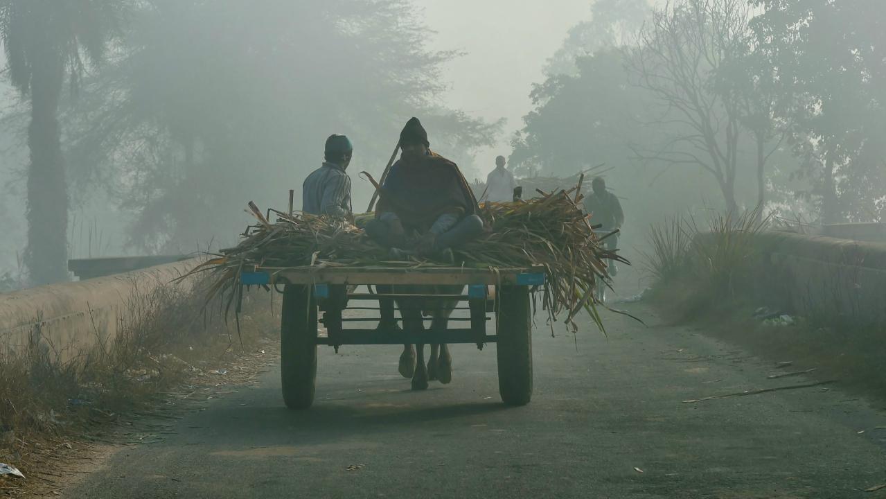 A bullock-cart moves across on a dense foggy morning, in Ghaziabad. (PTI)