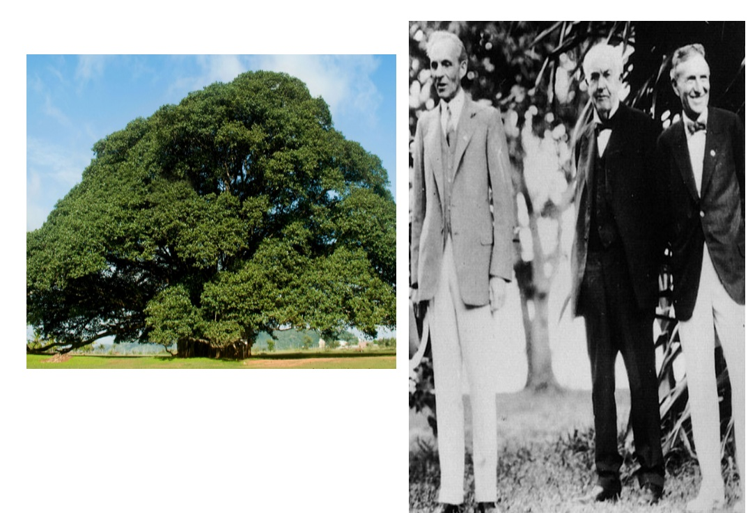 Ans 18: Henry Ford and Harvey Firestone and the Banyan tree (from Bania).
