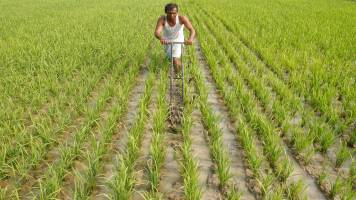 India, Netherlands to firm up cooperation in farm sector