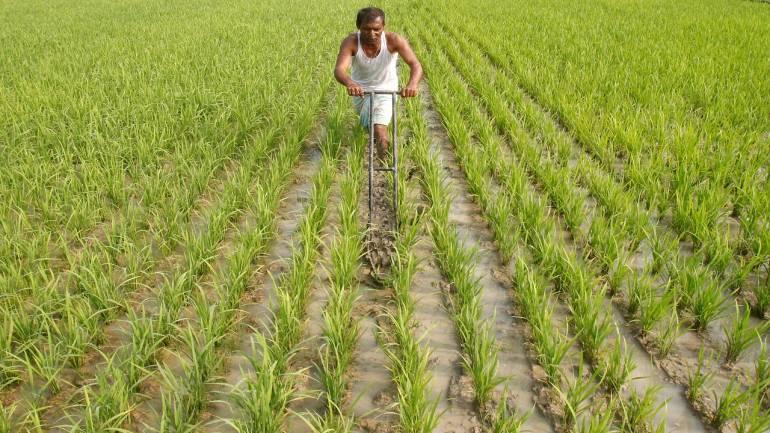 Drip irrigation can use about 40% to 60% less water compared to flood irrigation methods. Credit: PTI