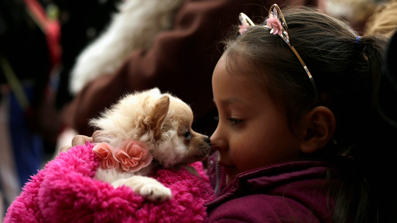 A girl interacts with her pet while waiting for a blessing from a priest on the day of Saint Anthony, the patron saint of domestic animals, in Ciudad Juarez, Mexico January 17, 2018. (Reuters)