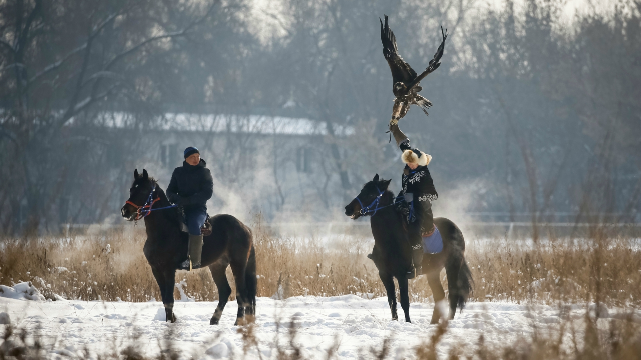 A hunter tries to control his tamed golden eagles during the annual competition at Almaty hippodrome, Kazakhstan February 8, 2018. (Reuters)