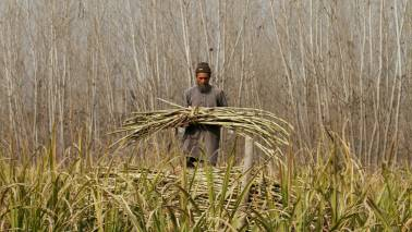 DCM Shriram: Weak sugar prices a drag, remain cautious