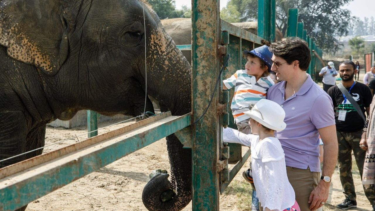 """He later visited Wildlife SOS. """"Wildlife SOS is doing important work rescuing captive Asian elephants across India, and giving them a new chance at life. Thanks for the very warm welcome at your sanctuary today,"""" he tweeted. (Twitter/Justin Trudeau)"""