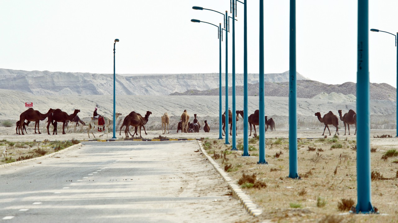 Kuwait | Cost per litre - Rs 24.78 | A camel herder lets his camels graze at a housing project in Khairan, southern Kuwait. (Image: Reuters)