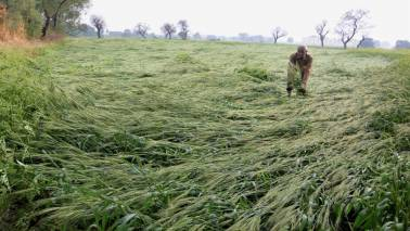 Maharashtra farmers affected by February hailstorms given Rs 313 cr: Min