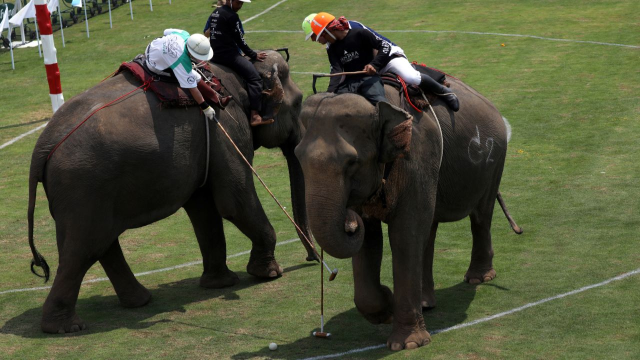Players ball fight during a match at the annual King's Cup Elephant Polo Tournament at a riverside resort in Bangkok, Thailand. (Reuters)