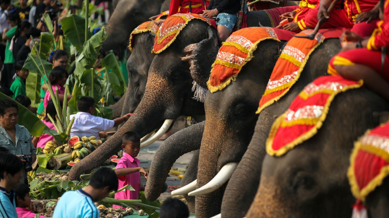 People feed elephants during Thailand's national elephant day celebration in the ancient city of Ayutthaya, Thailand. (Reuters)