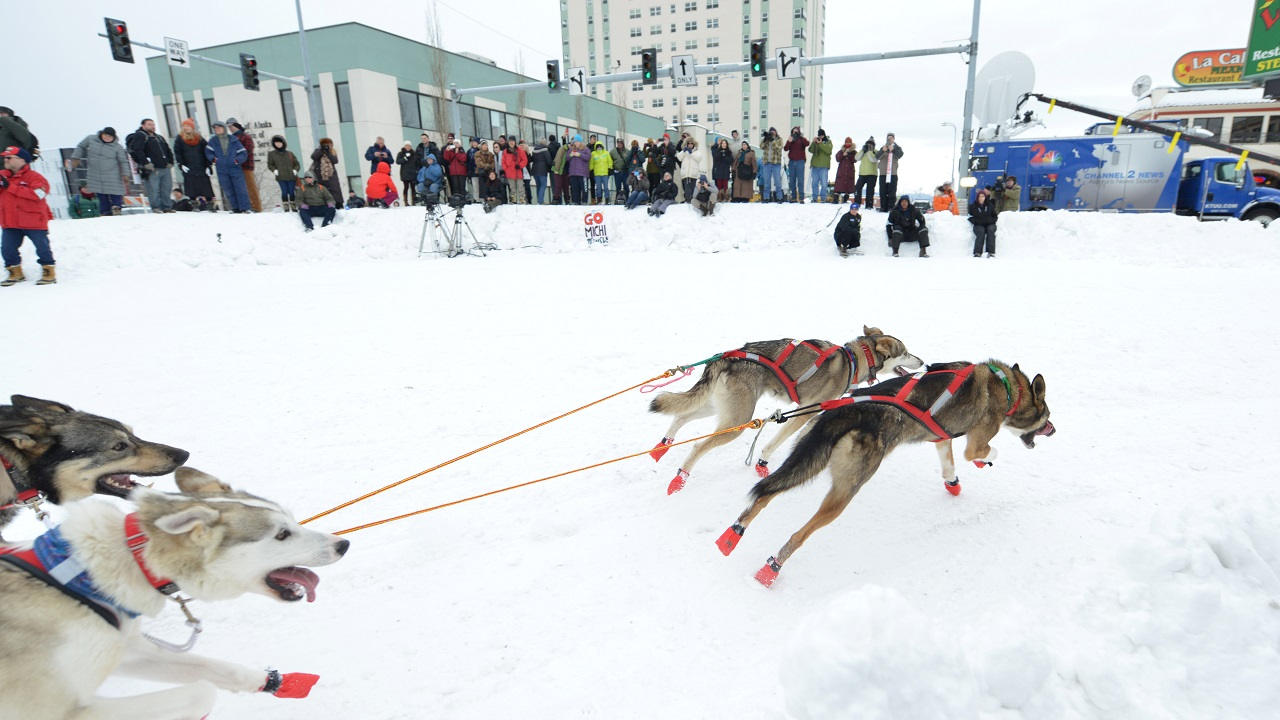 Tara Cicatello's team rounds the corner of 4th and Cordova during the ceremonial start of the Iditarod dog sled race in Anchorage. (Reuters)