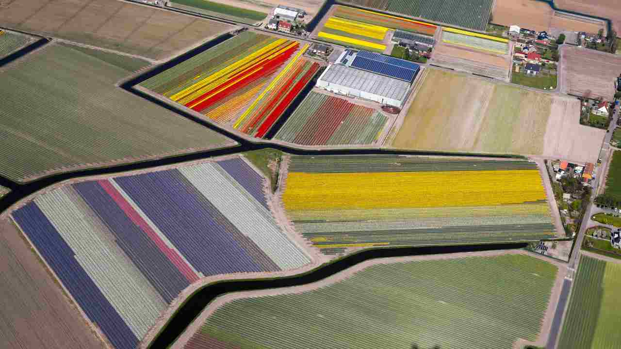 Aerial view of flower fields near the Keukenhof Park, also known as the Garden of Europe, in Lisse, The Netherlands. (REUTERS)