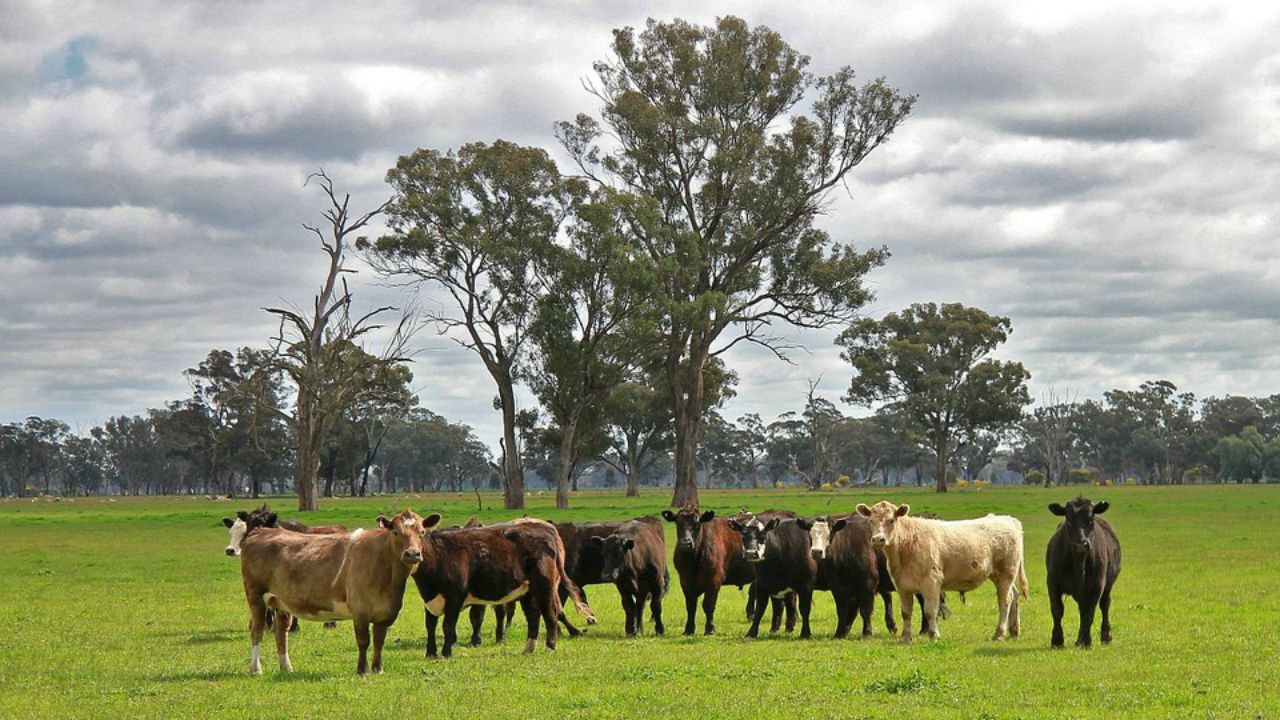 10. Brett Blundy | 3.4 million hectares | The Australian retail entrepreneur, who owns 3.4 million hectares of land, recently acquired the Walhallow Cattle Station in Northern Territory, Australia that cost him USD 77 million (Image: Pixabay)